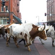 Long Horns drive Denver