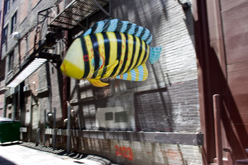 colorful-fish-alley-funny-photograph