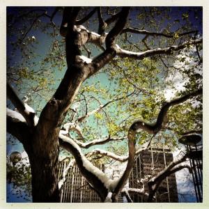 urban, spring, snow, tree