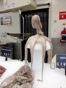 octopus, fish, display