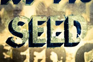 Seed Gold